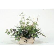 Mixed Mimosa and Oxalis Ivy in Rectangle Fleur De Lis Planter