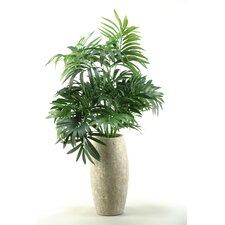 Parlor Palm Desk Top Plant in Decorative Vase