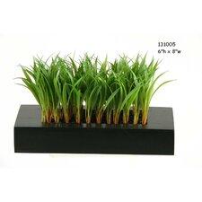 Wild Grass in Rectangular Planter