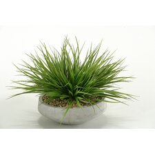Wild Grass in Contemporary Bowl