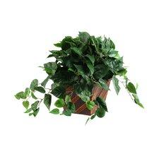 Philo Ivy Desktop Plant in Planter