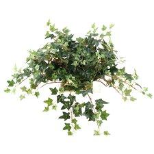 Mini English Green Ivy Tile Topper