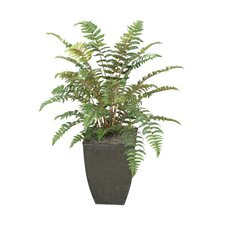 Leather Fern Floor Plant in Planter