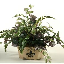 Oxalis Ivy and River Fern in Oval Fleur De Lis Planter