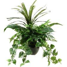 Dracaena, Philo and Palm Desk Top Plant in Pot