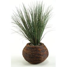 Onion Grass in Round Bamboo Pot