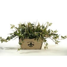Jamaican Ivy and Grass in Flared Rectangle Fleur De Lis Planter