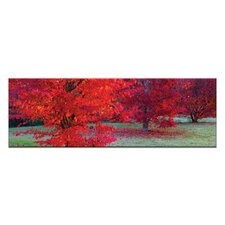 Bright Reds by Andrew Brown Wrapped Photographic Print on Canvas