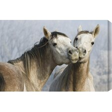 Funny Horses Photographic Print on Wrapped Canvas