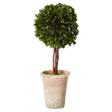 Preserved Boxwood Sphere Round Topiary in Pot