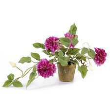 Faux Clematis Vine in Clay Pot