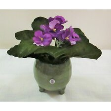February Birth Month African Violets Flowers