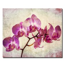 'Painted Petals XVIII' Graphic Art on Wrapped Canvas