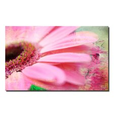 'Painted Petals XLIV' Graphic Art on Wrapped Canvas