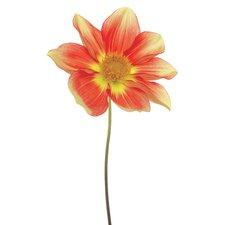 """""""Red Yellow Dahlia on White"""" Frameless Free Floating Tempered Glass Panel Graphic Art"""