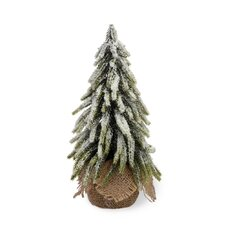 Fir Tree in Jute Base