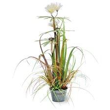 Plume Grass in Round Metal Pot