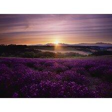 Jean Lavendar Sunset Art Photographic Print on Canvas