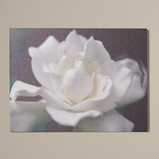 'Lovely Gardenia' by Kurt Shaffer Photographic Print on Wrapped Canvas