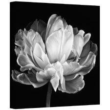 'Tulipa Double Black & White II' Photographic Print on Canvas