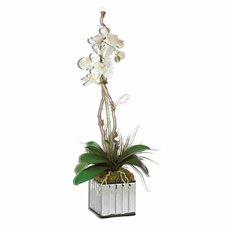 White Kaleama Orchid