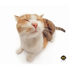 CleanScreen Cloth - Pet Me Cat (Set of 2)