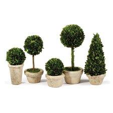 5-Piece Preserved Boxwood Topiary Set