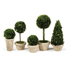Preserved Boxwood 5 Piece Topiary Set