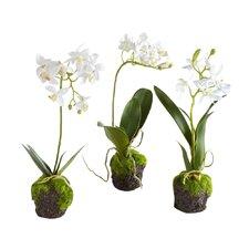 Dendrobium Drop In (Set of 2)