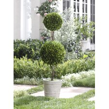 Double Ball Potted Boxwood Topiary