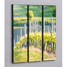 Rows of Vineyard Grapes 3 Piece Framed Painting Print Set