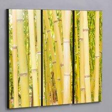 Hawaiian Bamboo Forest 3 Piece Framed Photographic Print Set