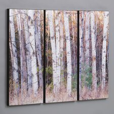 Birch Trees in the Fall 3 Piece Framed Photographic Print Set