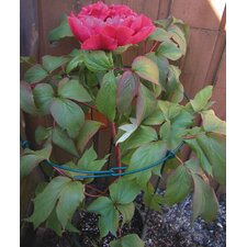 Novelty Flower Support (Set of 288)