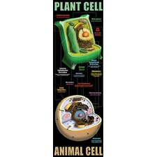Plant and Animal Cells Poster