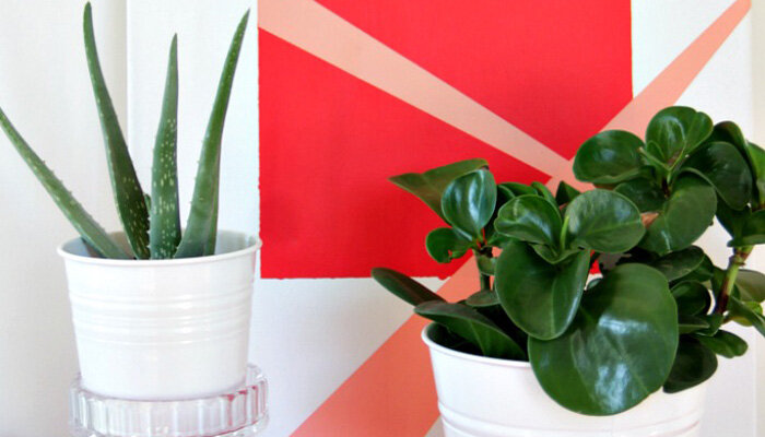 5 low maintenance house plants wayfair for Cool low maintenance plants