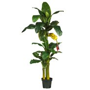 Brookings Triple Stalk Banana Tree in Pot