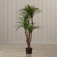 Seabeck Tropical Yucca Tree in Pot