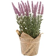 Lavender Faux Plant in Wrapped Paper (Set of 2)
