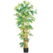 Bamboo Tree in Pot