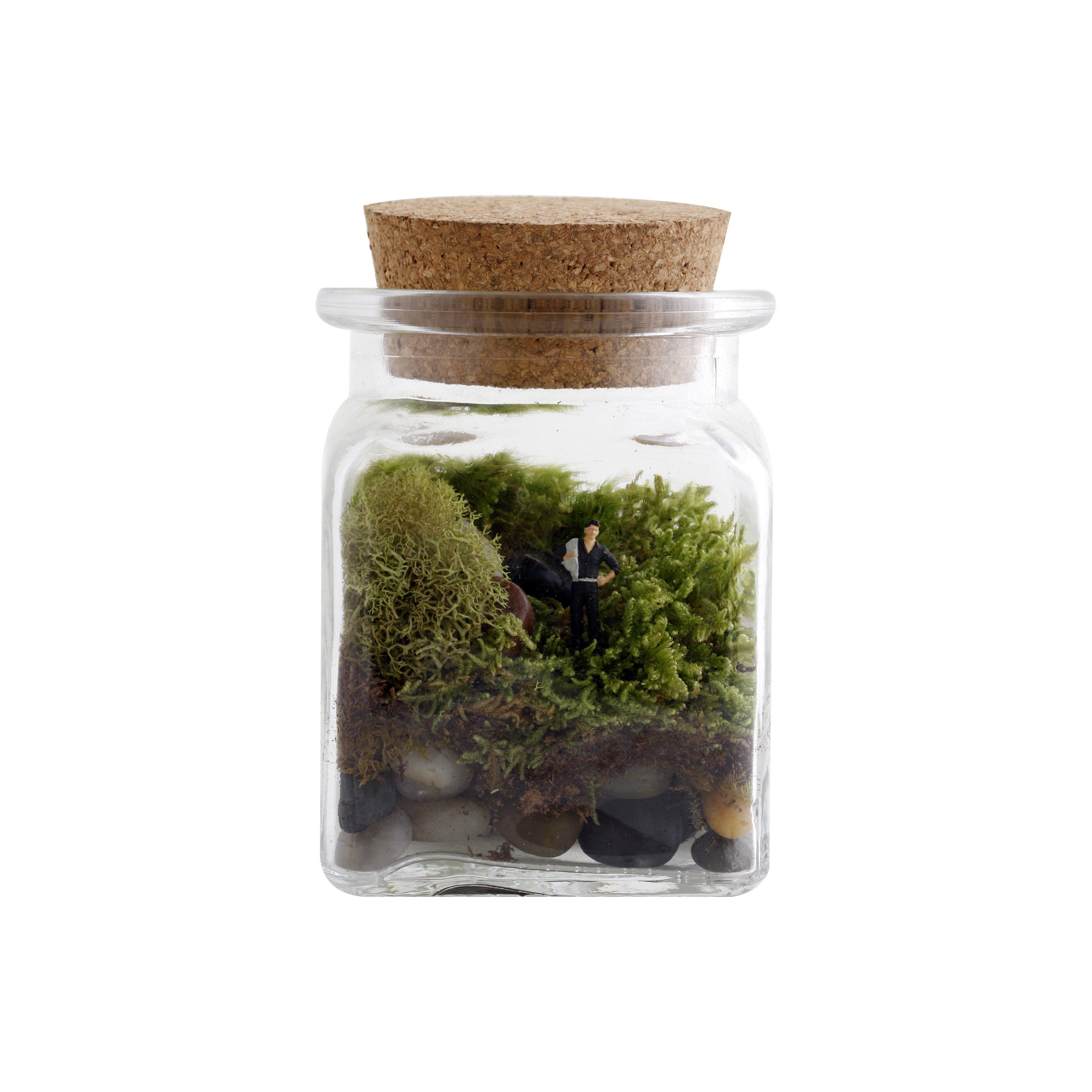 twig terrariums le petit singularite desk top plant in. Black Bedroom Furniture Sets. Home Design Ideas