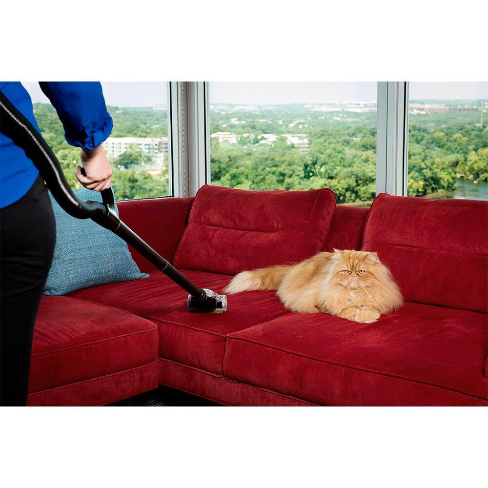 gruene bac pac ero backpack vacuum reviews wayfair. Black Bedroom Furniture Sets. Home Design Ideas