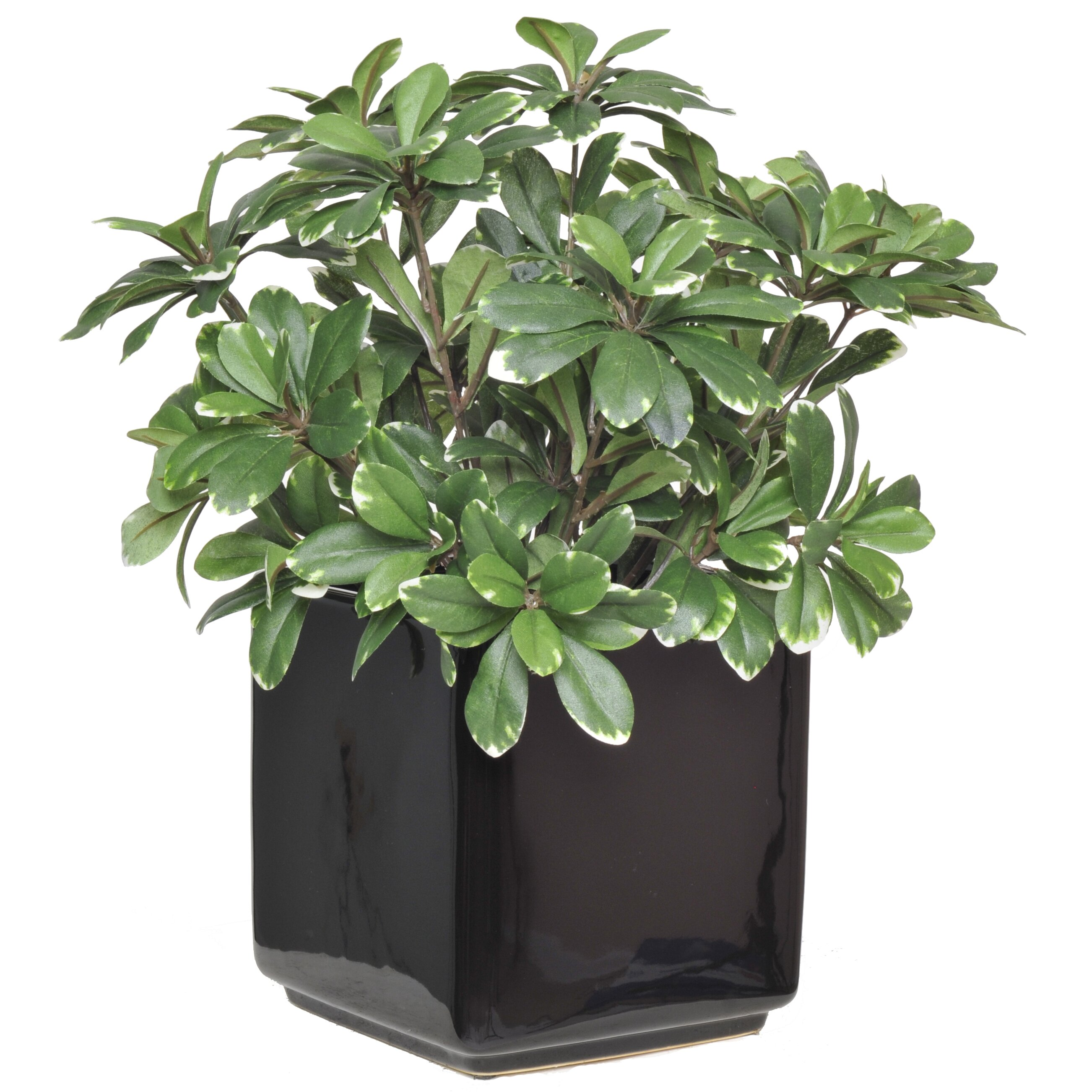 Flower Pots With Artificial Flowers Artificial Mini Variegated Pittosporum Desk Top Plant In