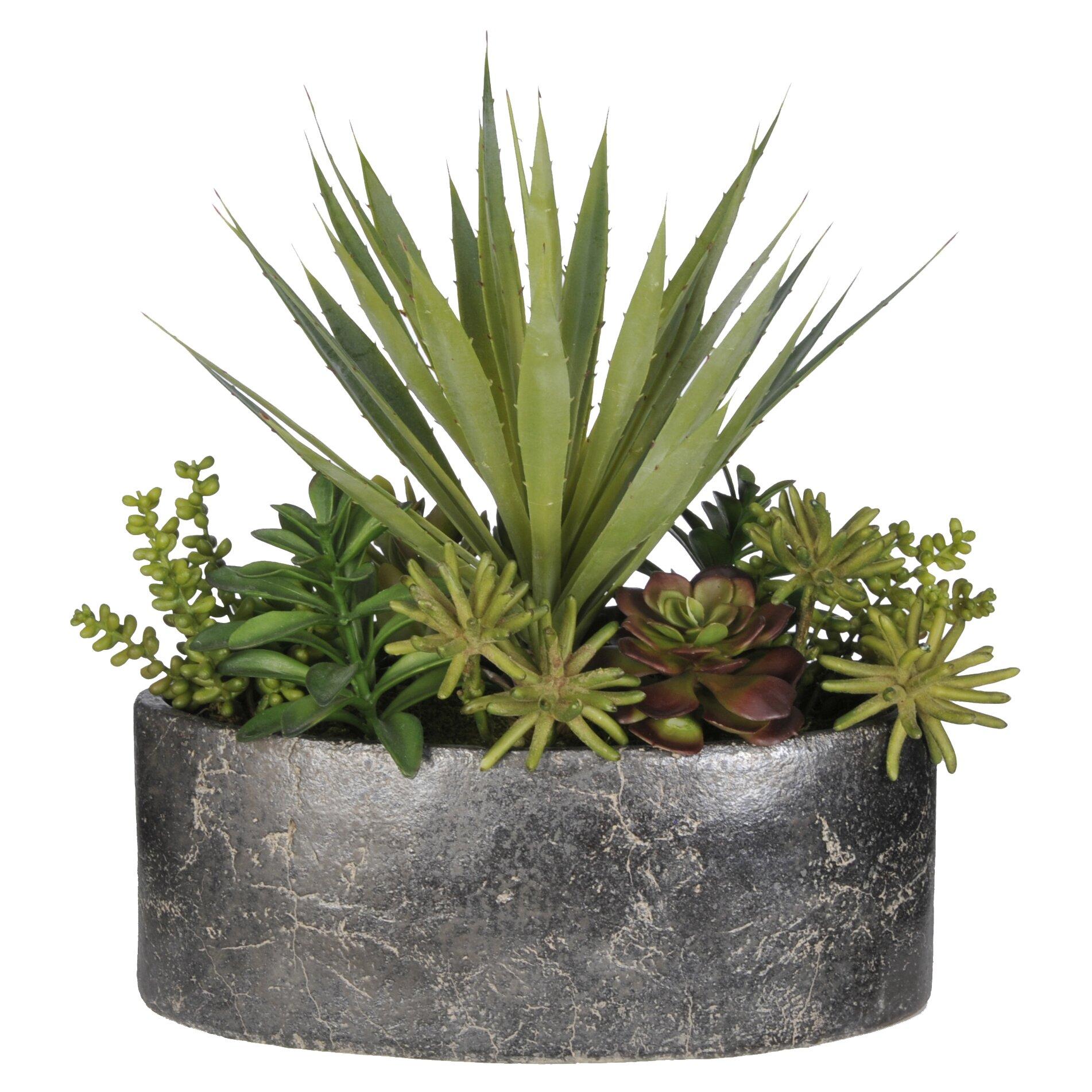 House of Silk Flowers Artificial Succulent Garden Desk Top