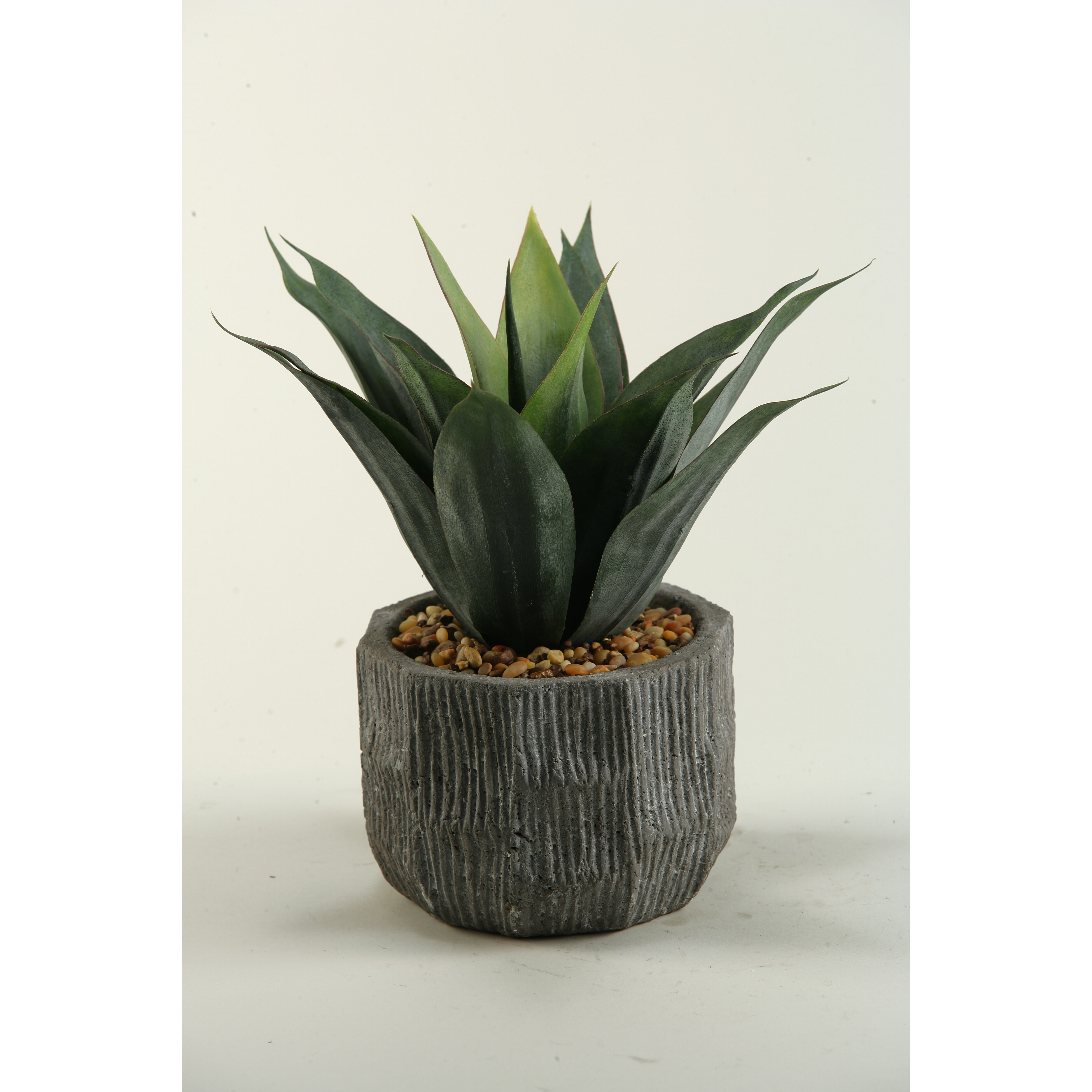 Agave Desk Top Plant in Planter
